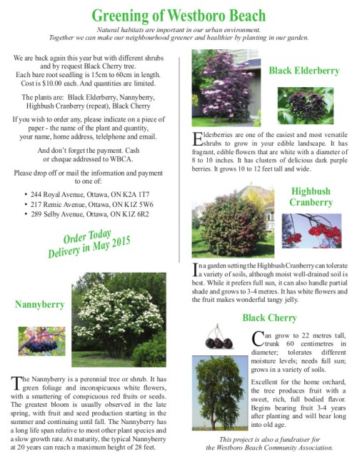 Westboro Beach Seedling Sale 2015.jpeg