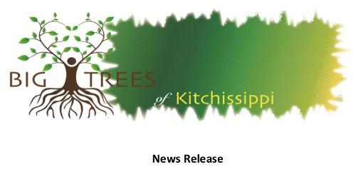 Big Trees of Kitchissippi.jpeg
