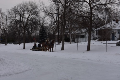 [FREE SLEIGH RIDES AT CHAMPLAIN PARK WINTER CARNIVAL JANUARY 30, 2016]