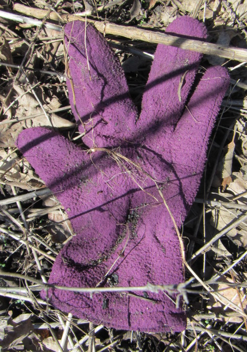 20160423_105324_AS_6592 One Glove of Many