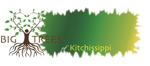 Big Trees Banner.jpeg