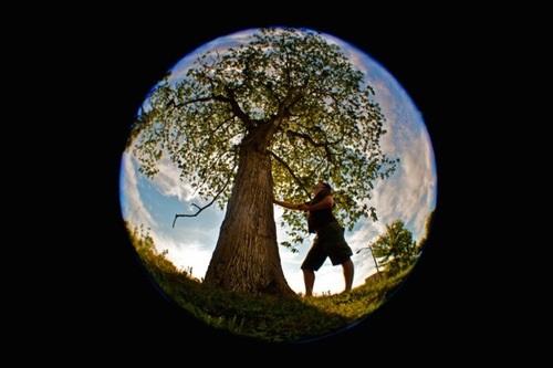 Big Trees Circle.jpeg