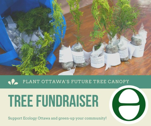 [Ecology Ottawa Tree Poster]