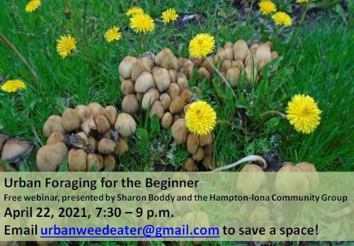 [Poster of dandilions for urban foraging webinar]